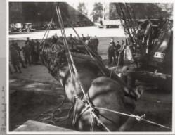 Istedløven: Nedtagning af løven i kasernegården, Lichterfelde, oktober 1945