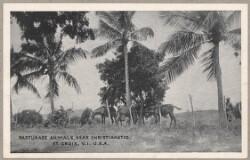 Arbejdere på St. Croix.